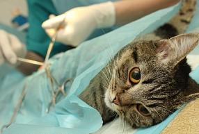 SIA Anivet - dzīvnieku kastrācija, sterilizācija, veterinārārsta mājas vizītes dzīvniekiem, dzīvnieku ārstēšana