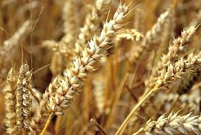 """""""Baltic Agro"""" iegādājās """"Tukuma straumi"""" ar mērķi uzlabot pozīcijas dzīvnieku barības un graudu biznesā"""