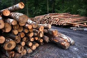 """Krustpils novada mežizstrādes uzņēmums """"DLLA"""" pērn būtiski kāpinājis apgrozījumu un peļņu"""