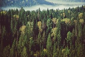"""SIA """"Inko Lukss"""" – pērk mežu, atmežošana, pērk zemi"""