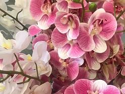 Mākslīgie ziedi orhideja floristika