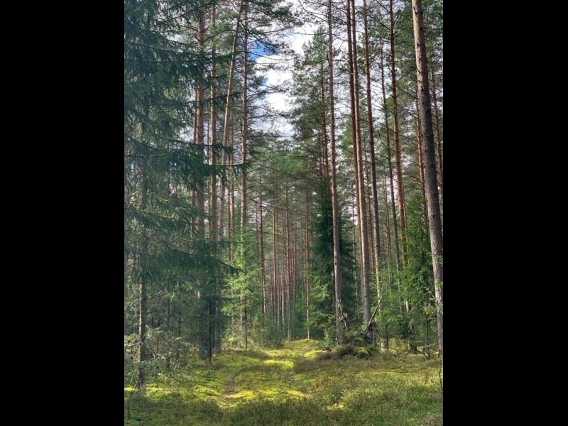Mežizstrādes pakalpojumi visā Latvijā