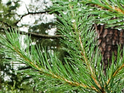 Meža apsaimniekošana