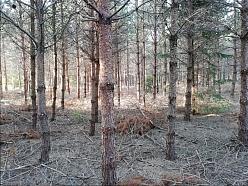Meža darbi
