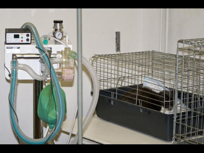 Moderns aprīkojums, operācijas dzīvniekiem, stacionārs