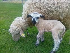 aitiņas