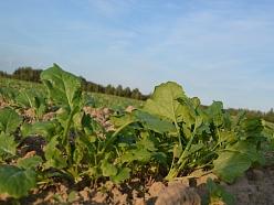 Agroķīmija Saldus, augiem un zemei