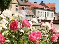 Tukums Rožu pilsēta