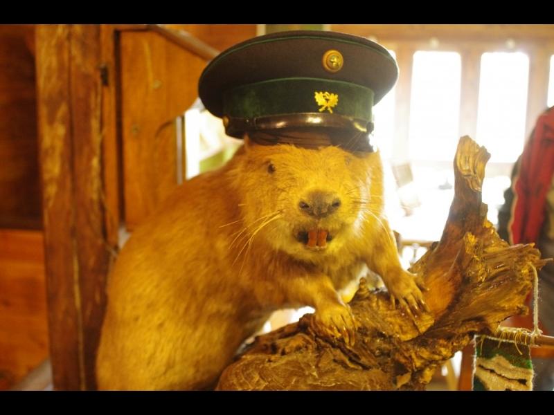 """Ķirbižu vides izglītības centrs """"Meža muzejs"""""""