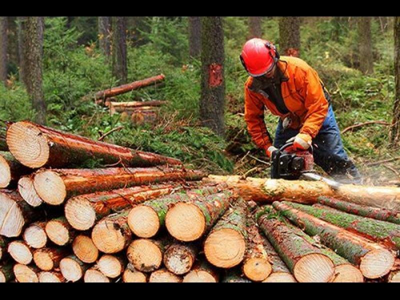 Kraujas Z, kokapstrāde, mežizstrāde