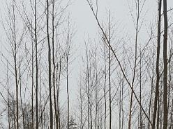 """""""M.M Oši"""", mežsaimniecība"""