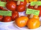 Vidzemes TV: Valmieras muzejā atklāta tomātu izstāde