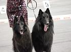 Valmierā notiek starptatiskā suņu izstāde