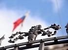 Uzņēmējs: Krievijas tirgus kā eksporta iespēja ir jāsaglabā, taču jāskatās uz rietumiem