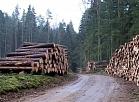 TV Spektrs: Mežizstrādes plāns, visticamāk, netiks mainīts