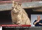 Balvos atklāta pirmā kaķu māja