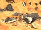 Vidzemes TV: Āraišu arheoloģiskajā muzejparkā norisinās eksperimentālās arheoloģijas nometne