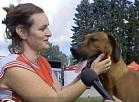 TV Spektrs: Izstādē Ādažos satiekas suņi un to saimnieki