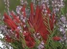 Skrundas TV: Senioru dārza svētki Skrundā