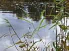 Smiltenes novada ezerus attīrīs no nozaudētiem vai speciāli atstātiem nelegāliem zvejas rīkiem