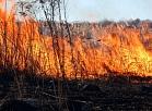 Kūlas ugunsgrēks Spilves pļavās.