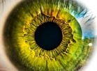 anatomy_biology_eye