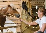 Valmiermuižas zirgu stallis