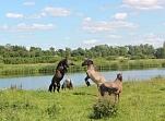 Lielupes palienes pļavas un savvaļas zirgi