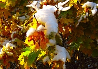 Pirmo sniegu oktobra pirmajā pusē varēs novērot visā Latvijā