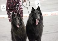 Valmierā notiek starptautiskā suņu izstāde