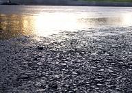Arī Kurzemē, paslīdot uz ledus, cilvēki satraumējušies