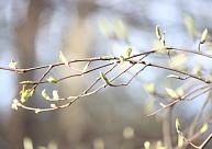 Nākamgad Latvijā iedzīvotājiem piedāvās dabas aizsardzības brīvdienas