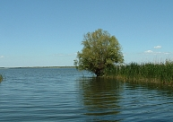 Valgundes pagasta ezerā izmests mirušas sievietes ķermenis; tuviniekiem neesot naudas bērēm