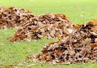 No oktobra Tukumā bez maksas pieņems savāktās rudens lapas
