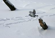 Alūksnē izveidojusies piecus centimetrus bieza sniega sega