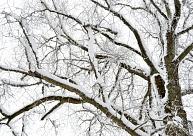 Otrdien daudzviet gaidāms sniegs
