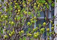 Aprīlis noslēgsies ar drēgnu laiku, maija sākumā cerības uz siltumu