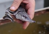Bijušais VVD darbinieks pārmet dienesta vadībai zvejas kontroles pasliktināšanos