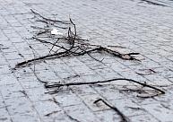 Vairākas Vidzemes pašvaldības neplāno lūgt valsts palīdzību vētras seku novēršanai