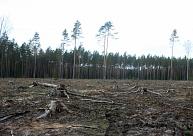 Līdz ar sala iestāšanos Latvijas mežizstrādātāji var piekļūt iepriekš nepieejamajām cirsmām