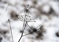 Naktī uz otrdienu daudzviet īslaicīgi snigs