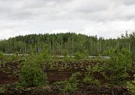 Ķemeros sestdien norisināsies Eiropas dabas un nacionālo parku dienas pārgājiens