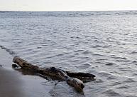 Lūdz atļauju atmežot zemi Melnsila apkaimē, lai nodrošinātu operatīvo auto piekļuvi jūrai