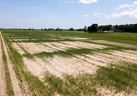 Plāno aicināt ārkārtas situāciju lauksaimniecībā izsludināt visā Kurzemes reģionā