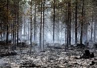 VMD: Ugunsbīstamība Latvijas mežos joprojām pilnībā nav zudusi