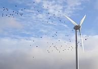 Pret vēja parku izbūvi Dobeles un Tukuma novadā savākti vairāk nekā 8800 paraksti