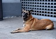 Par suņa pakāršanu piespriež piespiedu darbu un nosacītu cietumsodu
