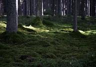 Kooperatīvs: Šogad Latvijā varētu būt palielinājušies mežistrādes apmēri