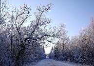 Pašvaldībām būs rūpīgāk jāvērtē atļauju izsniegšana koku ciršanai autoceļu malās