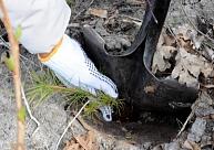 Aprīlī divos iekšpagalmos Ventspilī notiks koku stādīšanas talka